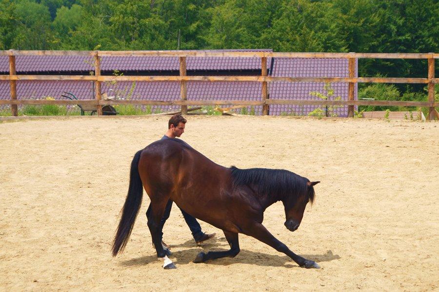Miron Bococi - dresaj cai - Potcoava